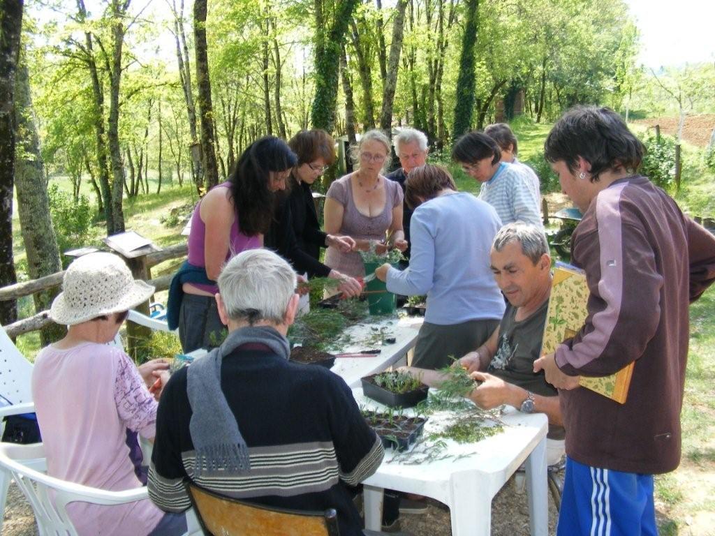 Atelier 39 boutures 39 dans le jardin bourian lot nature for Combattre les moustiques dans le jardin